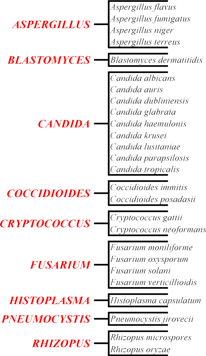 Genres of Fungal Infections